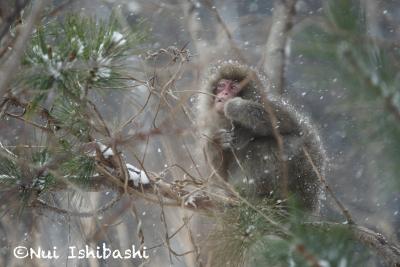 下北の猿_4753