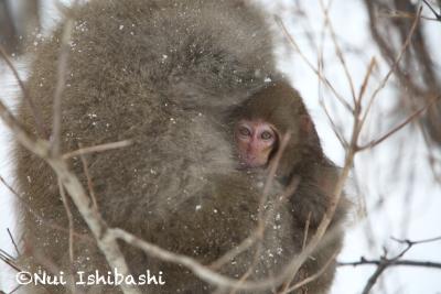 下北の猿_4837