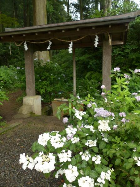 惣河内神社 紫陽花風景 2
