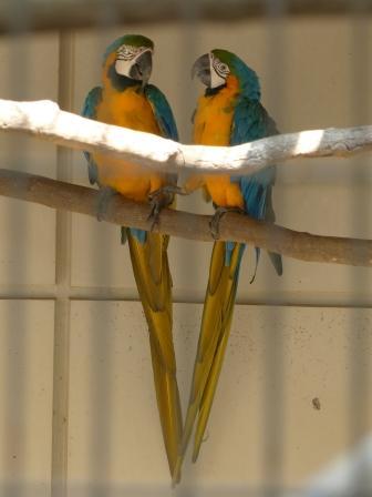 愛媛県立どべ動物園 ルリコンゴウインコ