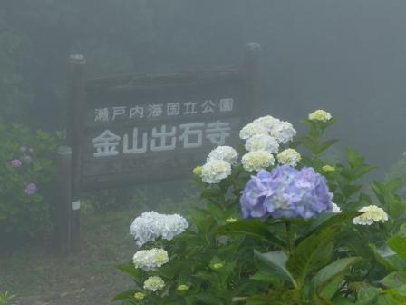 金山出石寺 紫陽花 1