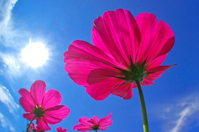 青い空 赤い花.jpg