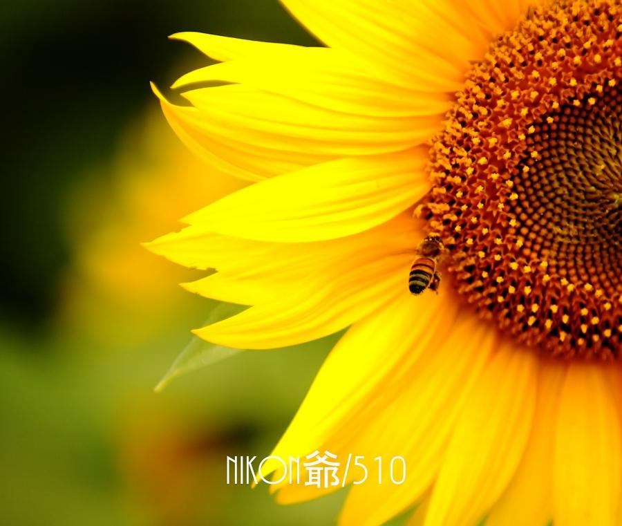 ハチ3_filtered