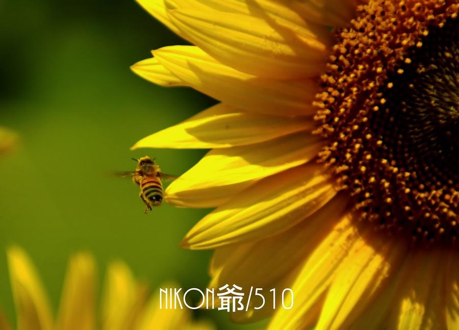 ハチのコピー_filtered
