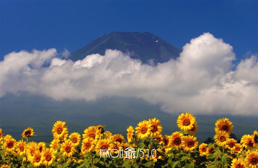 ひまわり富士山_filtered