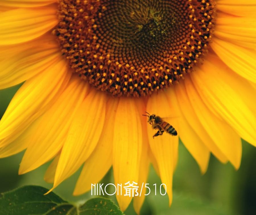 ハチ2_filtered