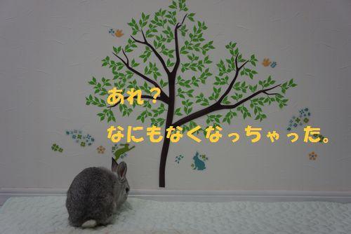 DSC03633.jpg