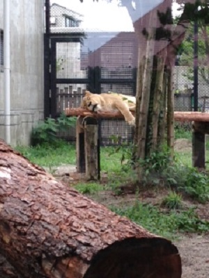 大森山動物園2