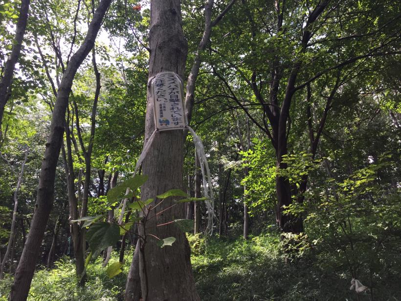 hiwadayama14.jpg