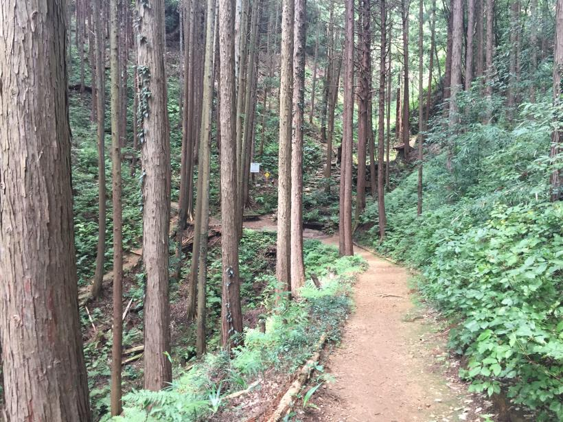 hiwadayama25.jpg