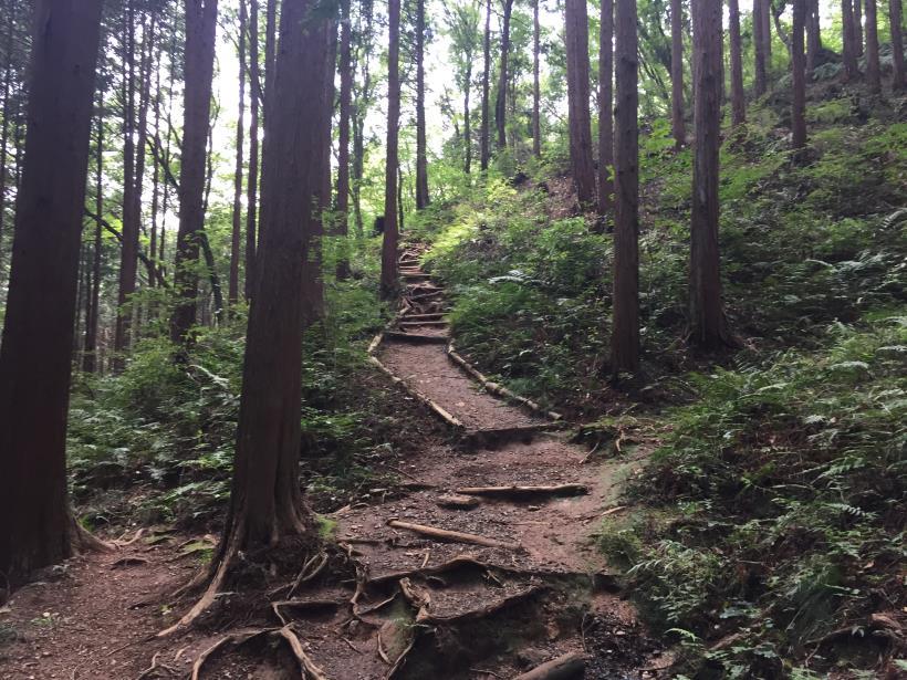hiwadayama29.jpg