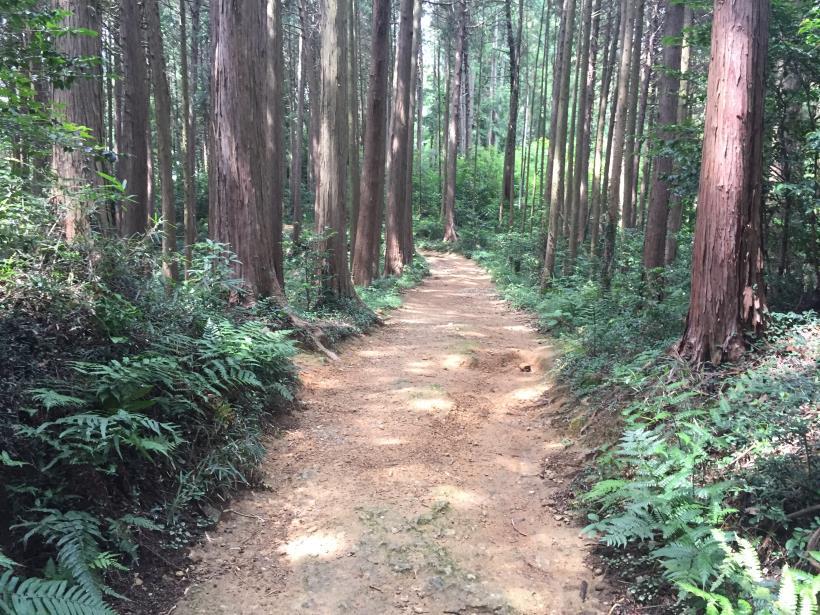 hiwadayama90.jpg