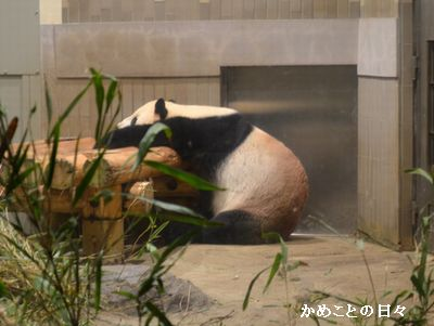 DSC_0295-panda.jpg