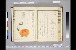 本草図譜巻64「柿」1