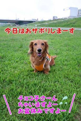 DSC07636_20150816152009456.jpg