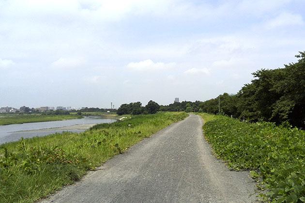 多摩川沿いの土手を調布方面に向います。