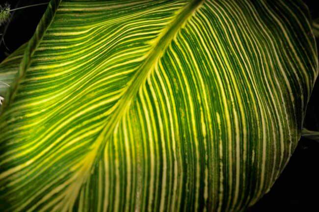 何の葉かわかりませんが、熱帯植物のように見えます。葉の裏からストロボを当てたら、それっぽく見えました。