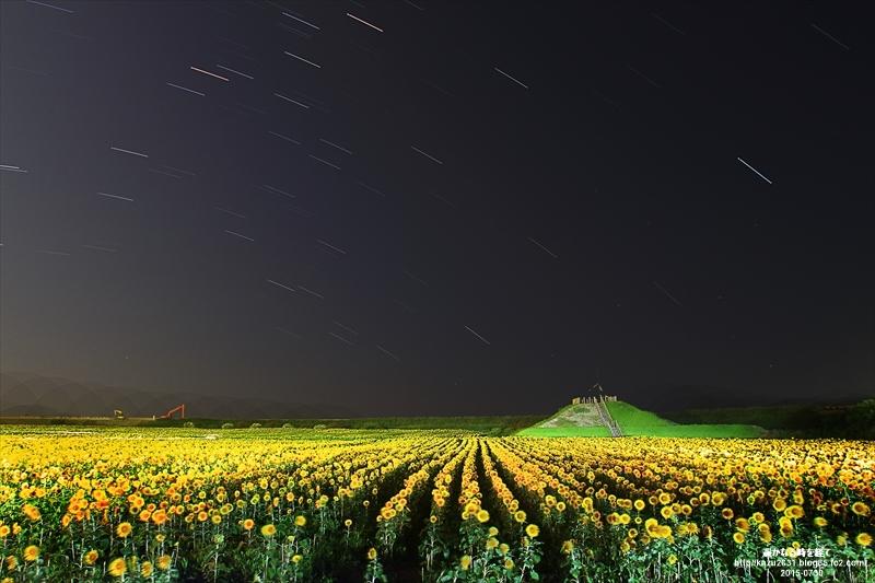柳川向日葵園-星