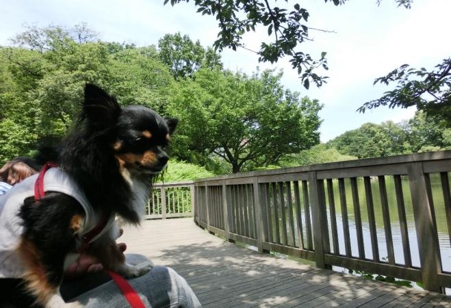 CIMG5347三ッ池公園