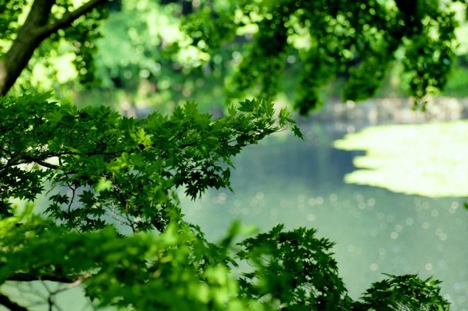 DSC04958三ッ池公園