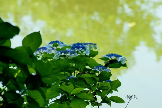 DSC05001三ッ池公園