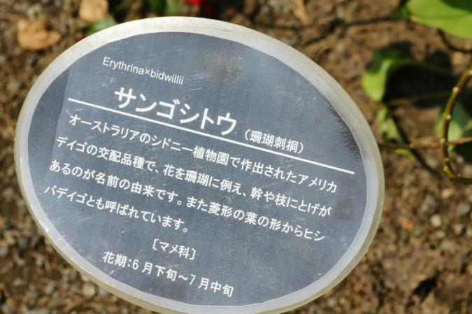 DSC06001新宿御苑