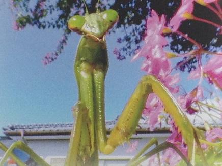 7202015映画昆虫S3