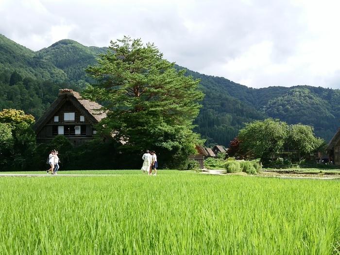 暑い夏が到来!! 夏休みの家族旅行に、お友達同士でのグループ旅行に白川郷へ ①