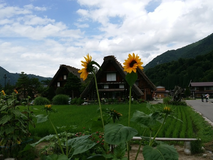 今年の夏は久し振りに故郷へ帰る 白川郷 ①