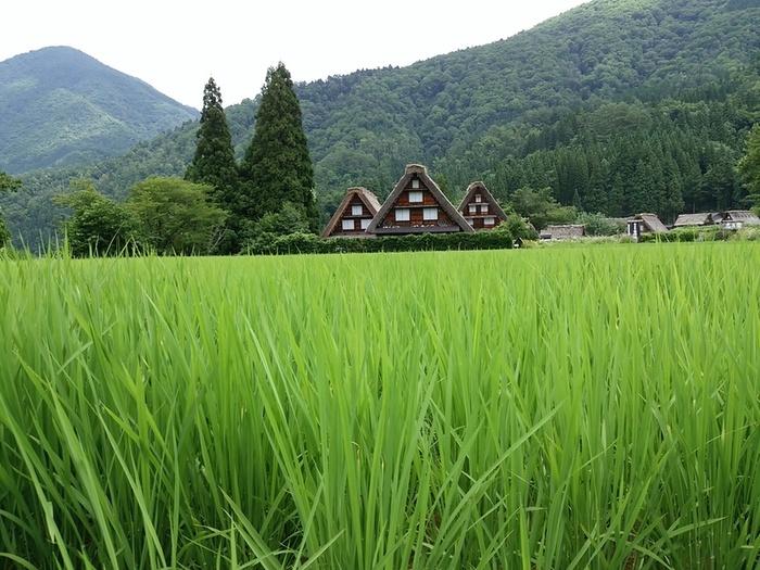 ★田舎満喫の夏休み★②