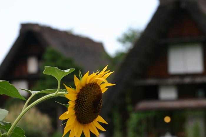 夏の旅行は、人の多いお盆を過ぎてからゆっくりと・・・♪白川郷へ ①
