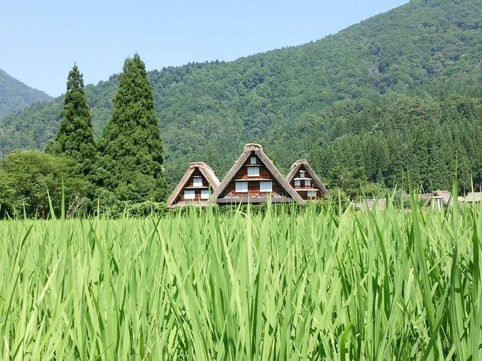 夏の旅行は、人の多いお盆を過ぎてからゆっくりと・・・♪白川郷へ ⑨