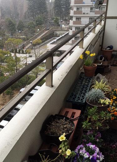 150217_veranda.jpg