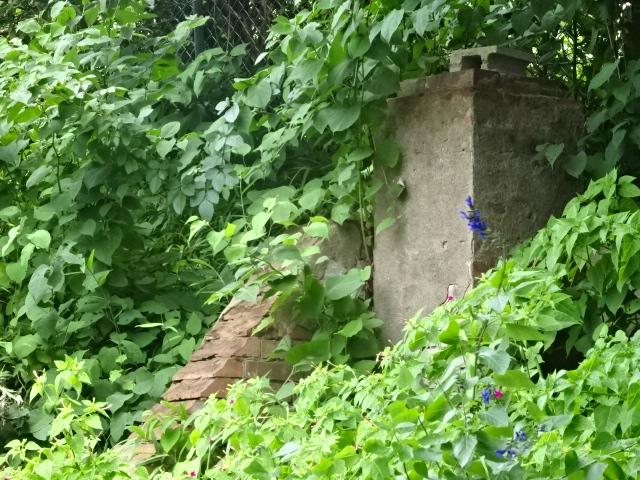 陸軍歩兵学校の塀