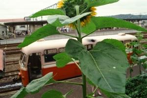 0022 向日葵+レールバス