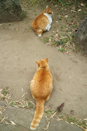茶太郎とトラ