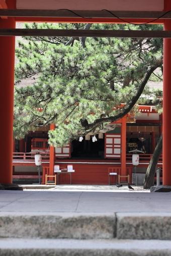 日御碕神社夏模様