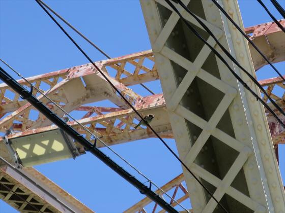 2015年7月赤川鉄橋05