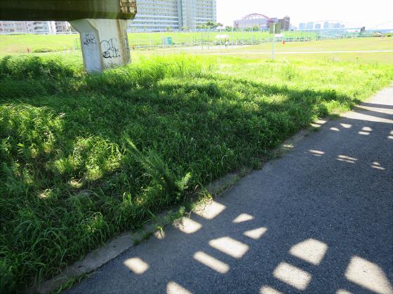 2015年7月赤川鉄橋08