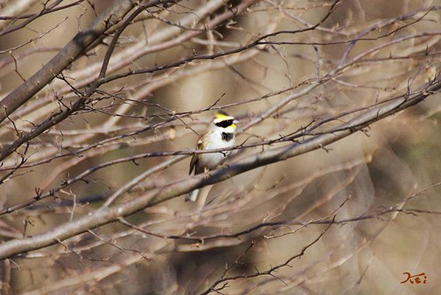 20150104野鳥03