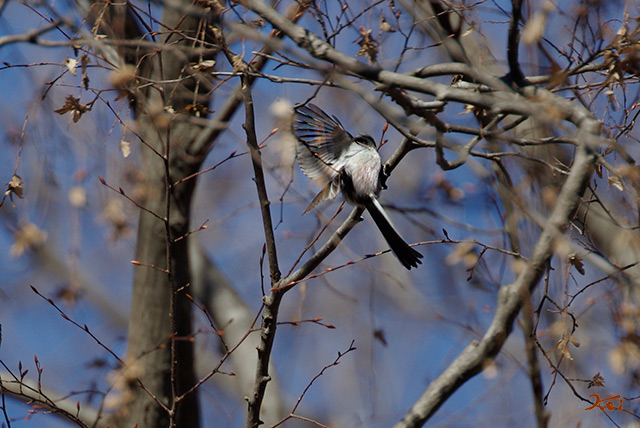 20150112野鳥庚申山08