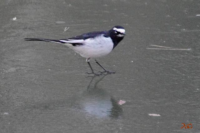 20150112野鳥庚申山10