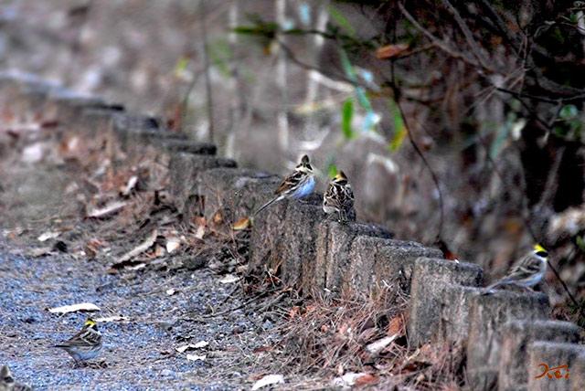 20150112野鳥庚申山01