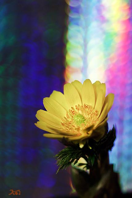 20150223自宅花撮り07
