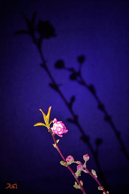 20150223自宅花撮り09