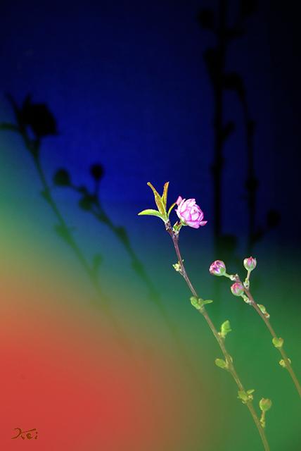 20150223自宅花撮り02