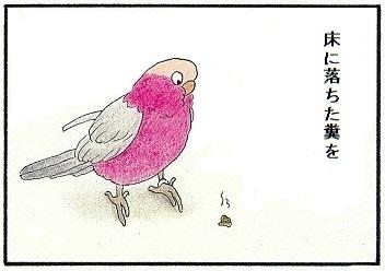 自分の糞に動じない鳥2