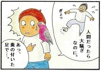 自分の糞に動じない鳥4