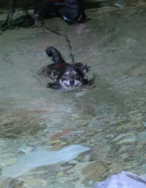 泳ぐマロ 2