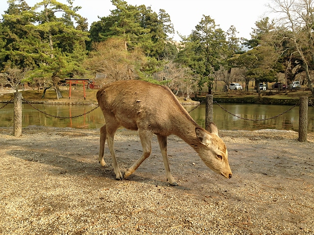 2014.12.30 年末の奈良観光。奈良の大仏さんを久々に見てきた♪